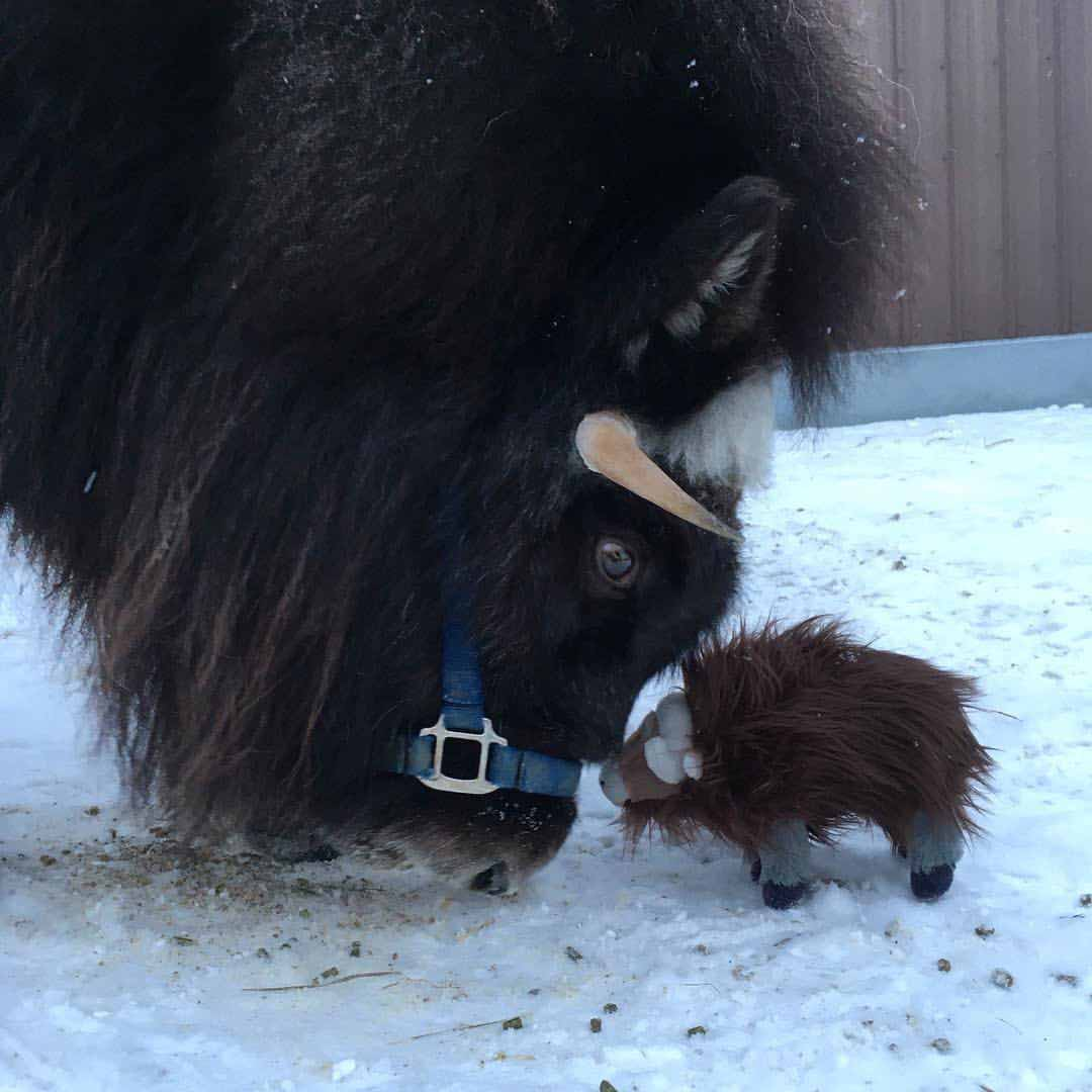 Musk Ox Plush Toy